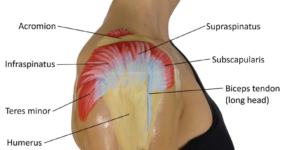 What Does Rotator Cuff Pain Feel Like?