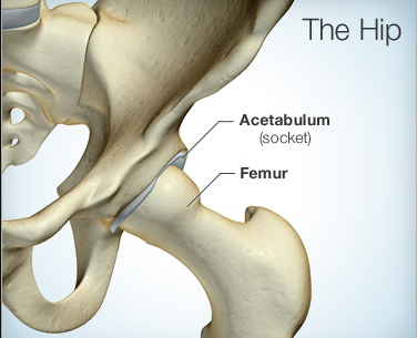Hip Pain Symptoms and Diagnosis