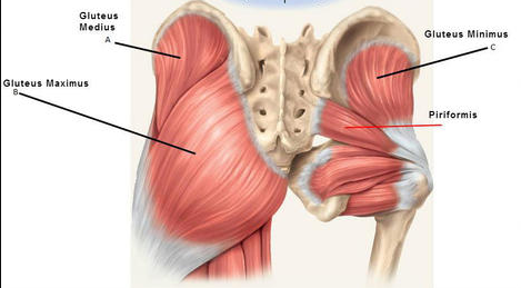 Hip muscle pain relief