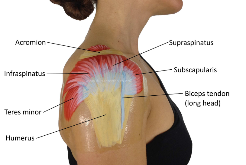 What Does Rotator Cuff Pain Feel Like